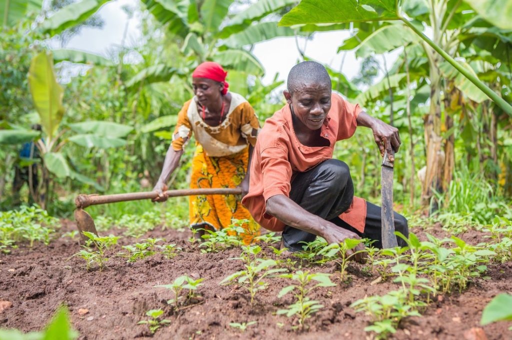 Sécurité alimentaire : Microsoft milite pour la technologie afin doper l'agriculture africaine