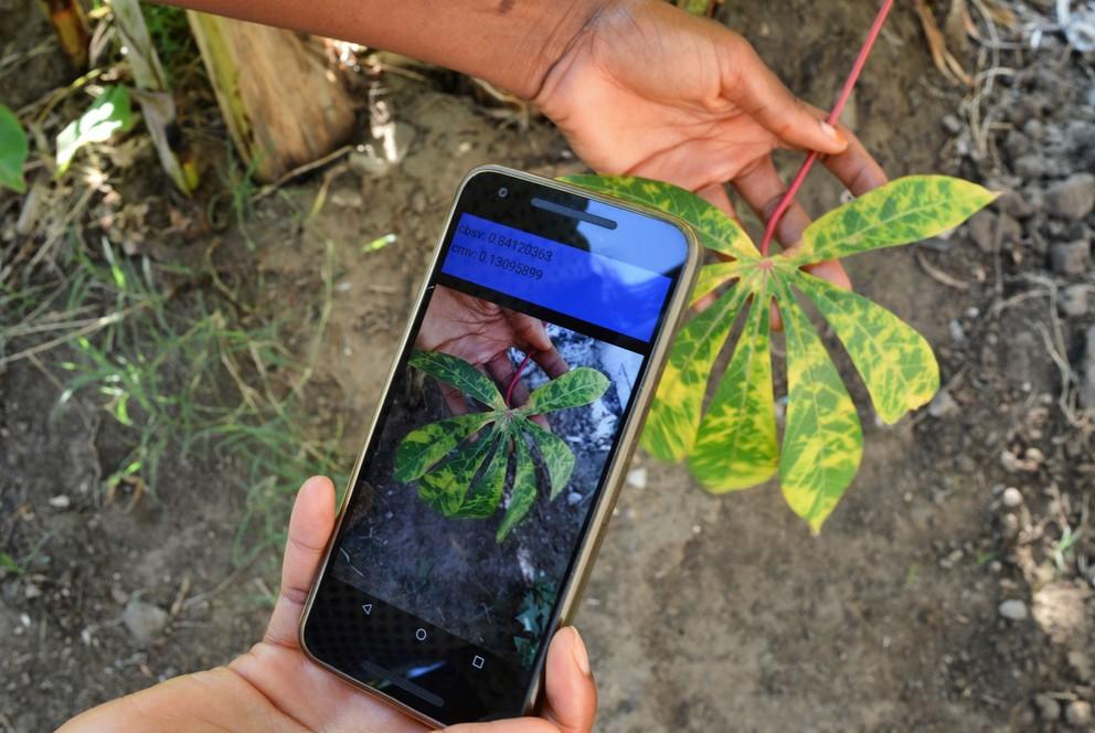Crop disease mobile app (IITA)