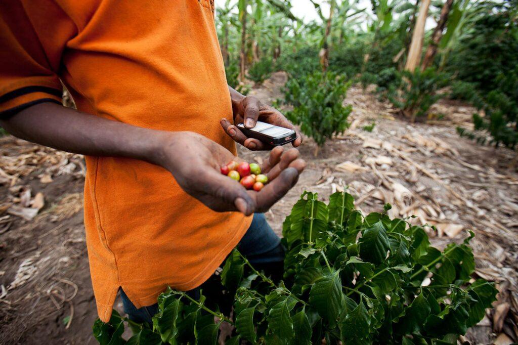 Covid-19: l'agriculture et l'alimentation seront-ils menacé?