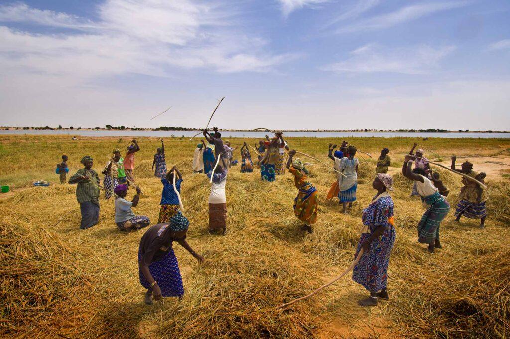 Le FIDA lancera une initiative offrant des conseils agricoles sur téléphone mobile à 1,7 million d'exploitants