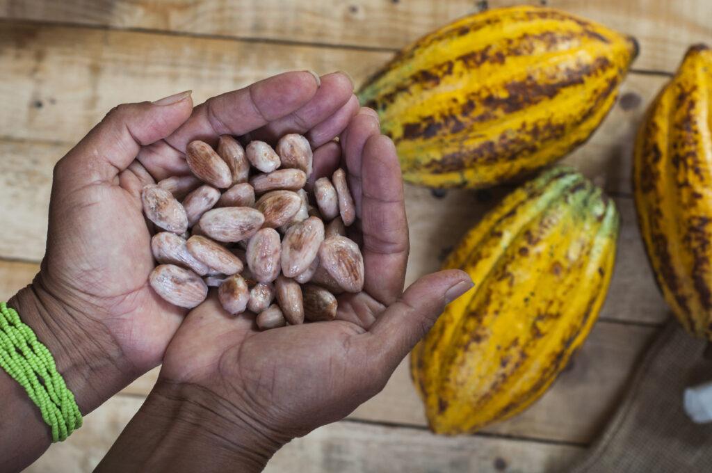 Côte d'Ivoire : un ingénieur conçoit une solution innovante contre la maladie du cacao